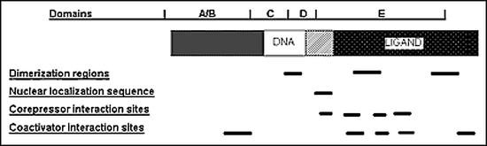Figure 1. Functional domains of the TH receptor (TR). The TH receptor (TR) is depicted schematically. The zinc finger DNA-binding domain (DBD) is denoted along with the carboxy terminal ligand-binding domain (LBD). Other functional domains and interaction sites are indicated.