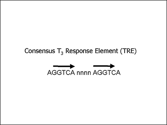 "Figure 4. Consensus thyroid response element (TRE). Studies of TRE's in many different promoters has allowed the derivation of a ""consensus"" TRE comprised of a direct repeat of the hexameric sequence, AGGTCA, spaced by four nucleotides (n). Of note, there is considerable diversity in the sequences of half-sites, orientation of half-sites, and bases that form the spacers between half-sites (see text)."
