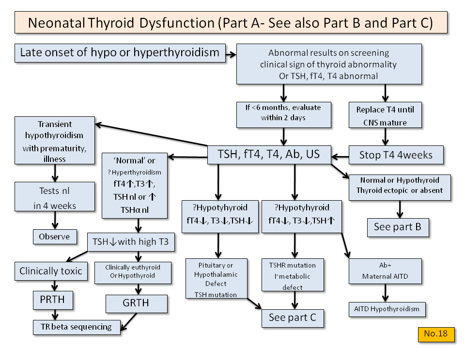 Neonatal Thyroid Dysfunction (Part A) - Thyroid Disease Manager Algorithms