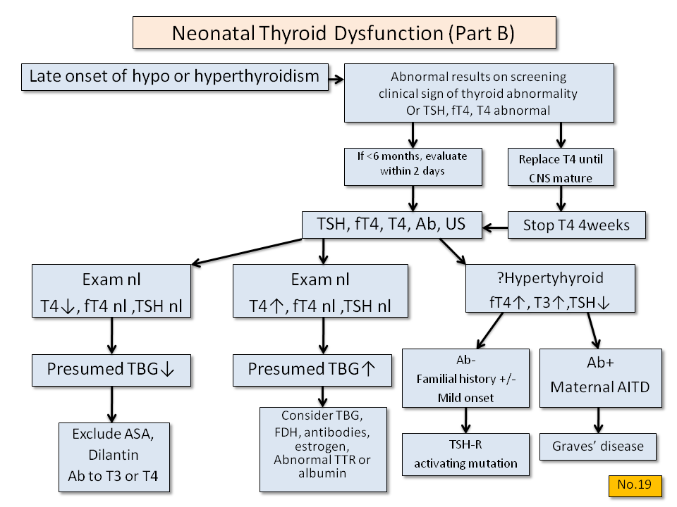 Neonatal Thyroid Dysfunction (Part B) - Thyroid Disesase Manager Algorithms