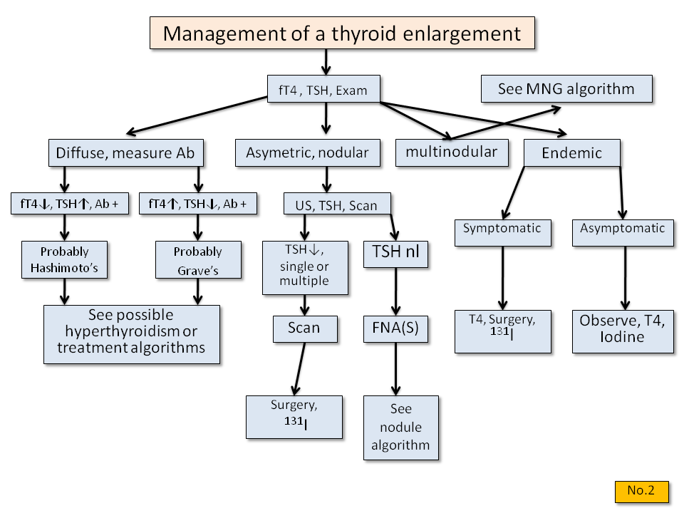 Management of thyroid enlargement - Thyroid Disease Manager Algorithms