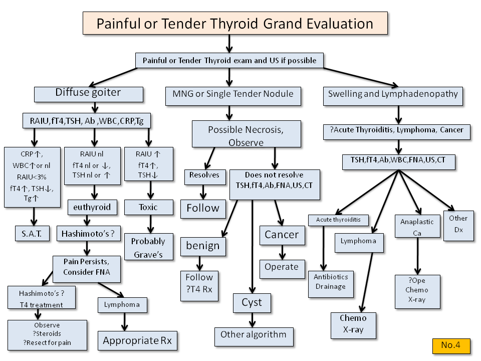 Painful or Tender Thyroid Gland Evaluation - Thyroid Disease Manager Algorithms