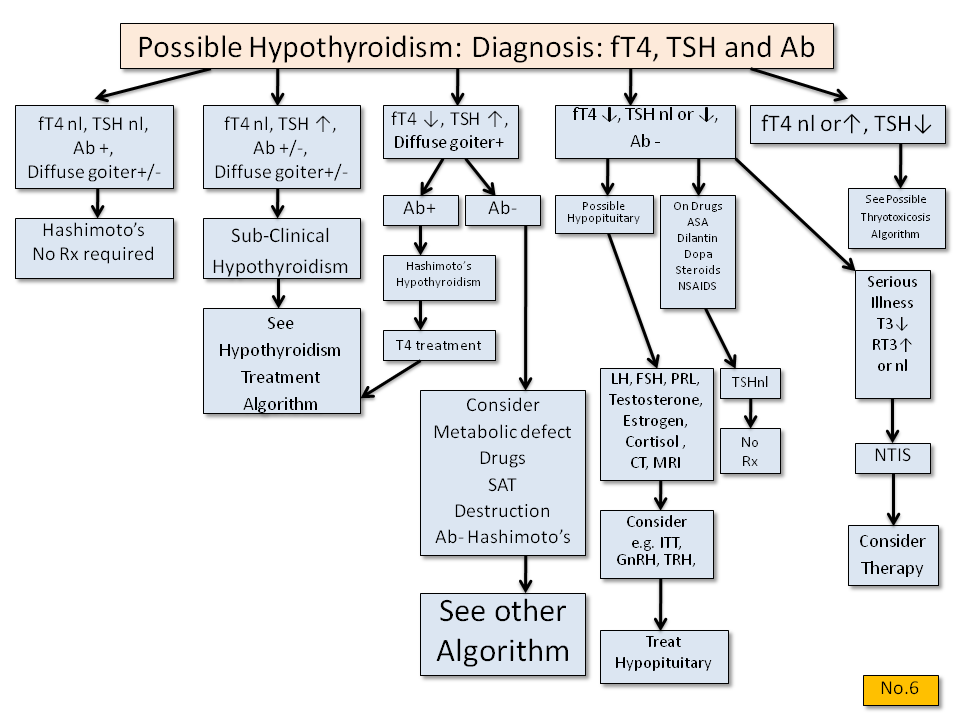 Possible Hypothyroidism: Diagnosis - Thyroid Disease Manager Algorithms