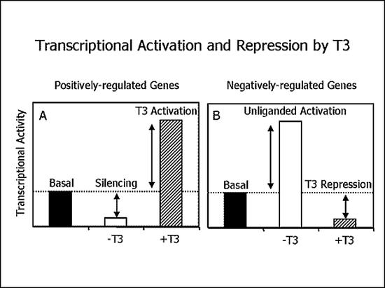 p160 steroid coactivator