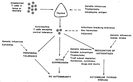 Figure 7-10Control of thyroid antigen-specific T cells in experimental autoimmune thyroiditis.  Development of disease depends on the balance of these factors, and their sites of operation are shown as dotted lines.  Reproduced from (255) with permission.