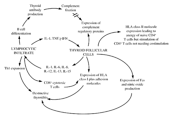 Figure 7-9Interactions between thyroid follicular cells and the immune system in autoimmune thyroid disease. Reproduced from Weetman AP, Ajjan R, Watson PF.  Bailliere's Clin Endocrinol Metab 11: 481-497, 1997 with permission.