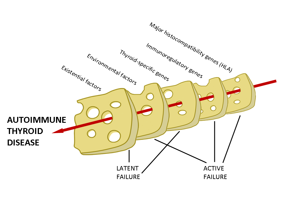 Figure 7-15A Swiss cheese model for the causation of autoimmune thyroid disease, showing the effect of cumulative environmental, genetic and existential weaknesses lining up to allow AITD to occur, like the holes in the slices of cheese.  In reality each of the slices depicted is composed of many individual components.  The Swiss cheese model for accident causation, for instance an airplane crashing, incorporates active failures (e.g. pilot error) and latent failures (e.g. maintenance deficiency).  Some factors contributing to the initiation of AITD are latent (e.g. ageing, growing up in a hygienic environment) and others are active (e.g. possession of an HLA allele which permits presentation of a thyroid autoantigen). Reproduced with permission from Weetman AP, Europ Thy J 2013 in press.